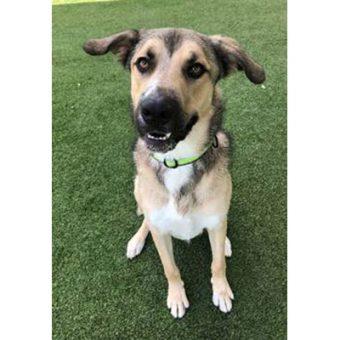 Adopt | Rocky Mountain Animal Rescue